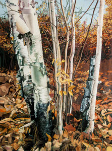 'Autumn Birches' by Jim Jordan