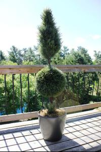'Cypress Topiary' by Artistic Artificial Trees